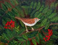 Wood Thrush in Rowan