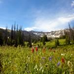 """Mt Wildflowers"" by Jason_Speer_Photo"