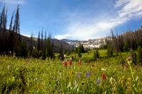 Mt Wildflowers
