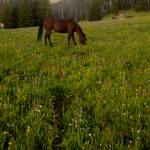 """Horses Grazing"" by Jason_Speer_Photo"