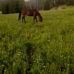"""Horses Grazing"" by Jason_Speer_Photo"
