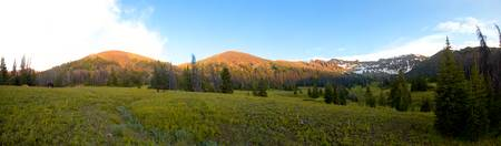 Borner Fork Meadows
