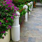 """Embossed & Alive - tropical walkway and fence"" by mAsTeRpIeCe"
