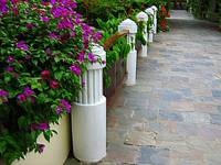 Embossed & Alive - tropical walkway and fence