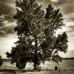 """GraveYardTree"" by EricSimpson"