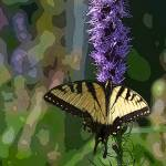"""Yellow Swallowtail"" by jodipflepsen"