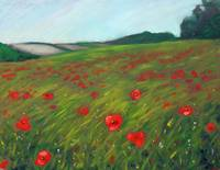 Poppy field in Ben Salem
