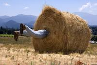 A Roll in the Hay