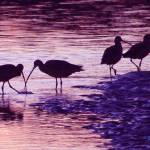 """sunset birds"" by artfilmusic"