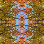 """Psychedelic Autumn"" by WildWomanPhotos"