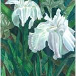 """Iris japanes Huko"" by florist59"
