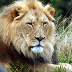 """""""the king"""" by MyTreasuredImages"""
