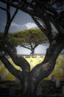Rosecrans National Cemetery at Point Loma in San D