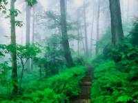 Foggy Appalachian Trail