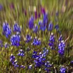 """""""Purple Paint"""" by stepheniedagata"""