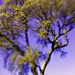 """""""painted tree"""" by stepheniedagata"""