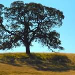 """Oak tree -secret location"" by stepheniedagata"