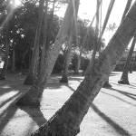 """Lines"" by stepheniedagata"