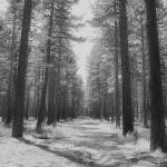 """A Walk through the woods"" by stepheniedagata"
