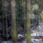 """Twin Trees"" by stepheniedagata"