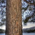 """""""Tree"""" by stepheniedagata"""