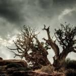 """Approaching Desert Storm"" by stepheniedagata"