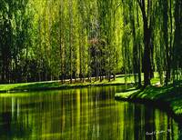 Weeping Willow Tree Ribbons Meditation Wall Art