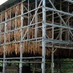 """Tobacco Barn"" by ImagesbyMauveline"