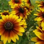 """""""full bloom"""" by newtstew"""