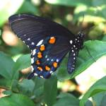 """""""beautiful butterfly"""" by MyTreasuredImages"""
