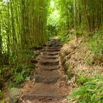 """Steps To The Bamboo Forest"" by PhilStone"