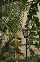 Tropical Lamppost