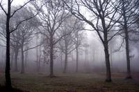 Firestone Copse in Mist
