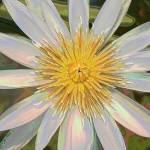 """Daisy"" by JennyHudson"