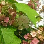 """""""Smith Flower Garden 2009 014"""" by juliegipsonsmith"""