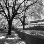"""Infrared Black and White Trees"" by darknesstolight"