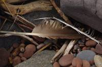 ROCKS ~ Eagle Feather on Lake Superior