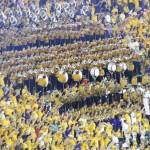 """LSU Football Lsu Band"" by lsutigerjrc"