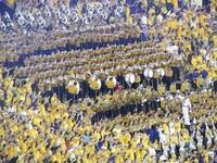 LSU Football Lsu Band