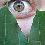 """Hazel eyes agaisnt a leaf"" by PhotographLover"
