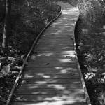 """""""Path Least Taken"""" by Rosemary"""