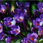 """""""Lilac"""" by micspics444"""