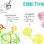 """Edible Flowers by Naomi Bardoff"" by TheyDrawandCook"