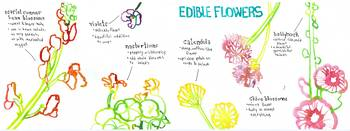 Edible Flowers by Naomi Bardoff
