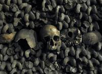 Scull in the Catacombes of Paris