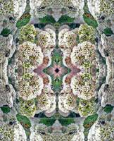 I Sedum, But I Can't Believe 'em ~ Photo Quilt