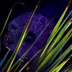 """spiderweb(vibrant)"" by MartinaPaul"