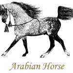 """Arabian Horse Drawing"" by evansonart"