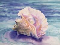 'Caribbean Queen' Queen Conch Shell Watercolor by Savanna Redman