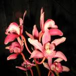 """Mauve Orchids"" by JoyceDickens"